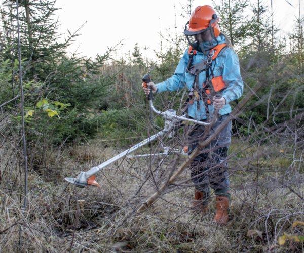Elever pleier ungskogen på Melsom