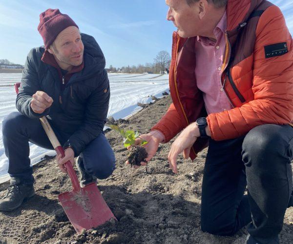 Åsmund gir Kårstein oppskriften på å dyrke salat