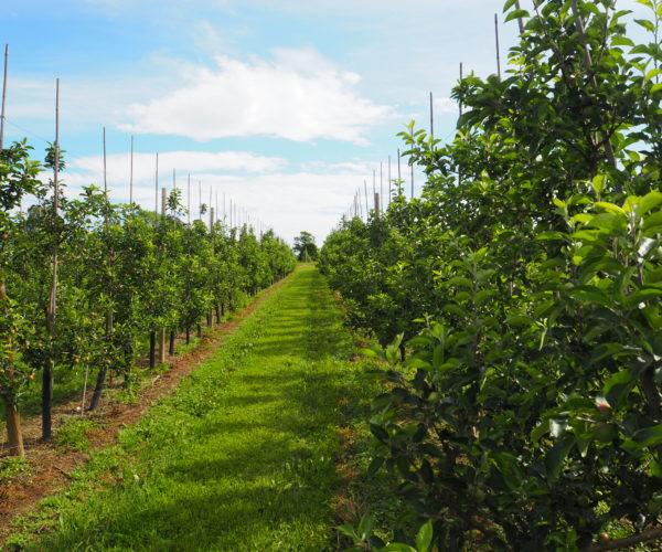 Dette bildet viser trær i et friskt felt